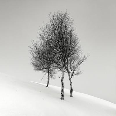 dc302e08971b04fc9d912c4265422e77--pellegrini-white-photography